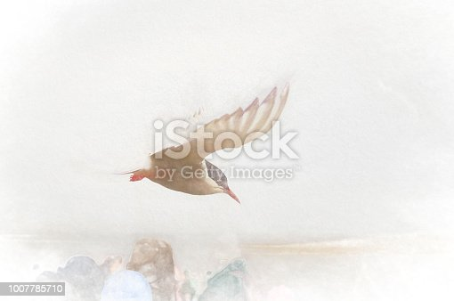 Arctic Tern in flight against a grey sky background. This image has been heavily post processed to create a dreamy painterly look.