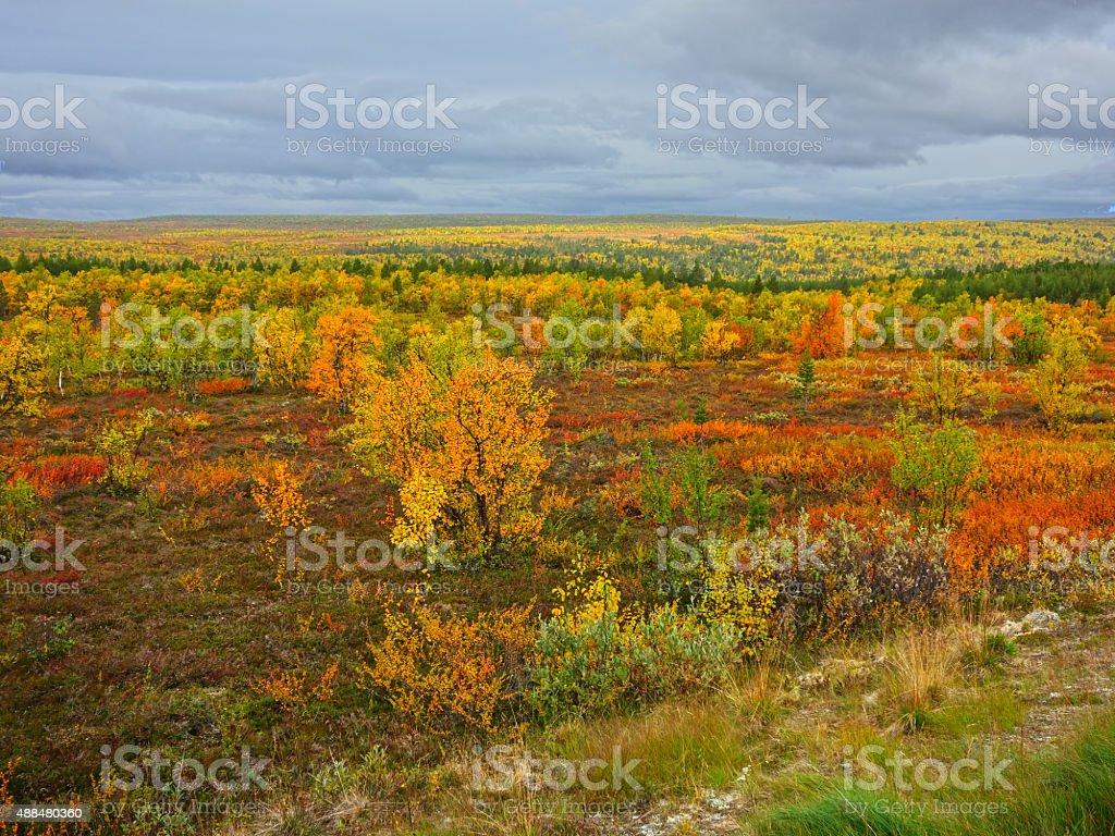 arctic tundra stock photo