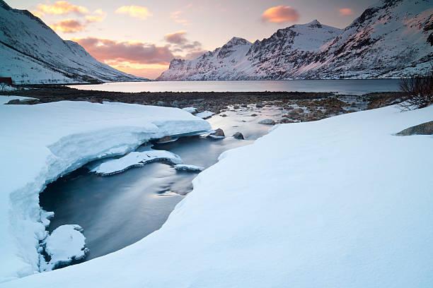 북극해 생태 보호 구역 - 생태 보전 지역 뉴스 사진 이미지