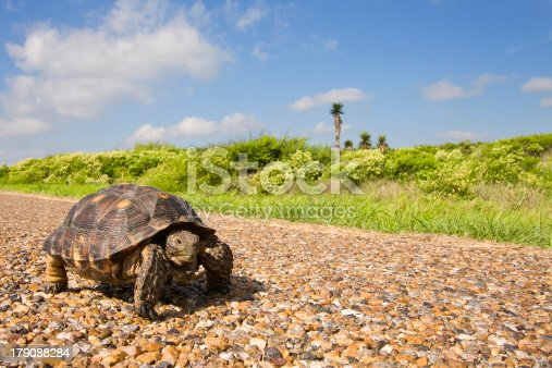 istock Are we there yet. 179088284