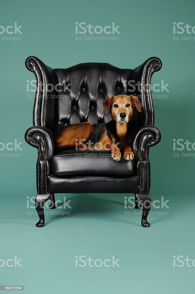 Are you comfortable? royalty-free stock photo