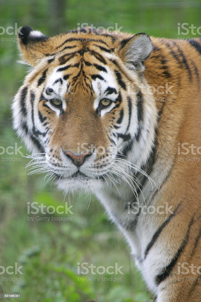 Are you looking at me? royalty-free stock photo