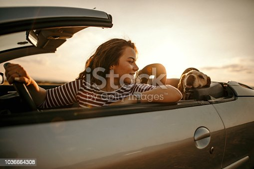 Woman driving with dog to sunset
