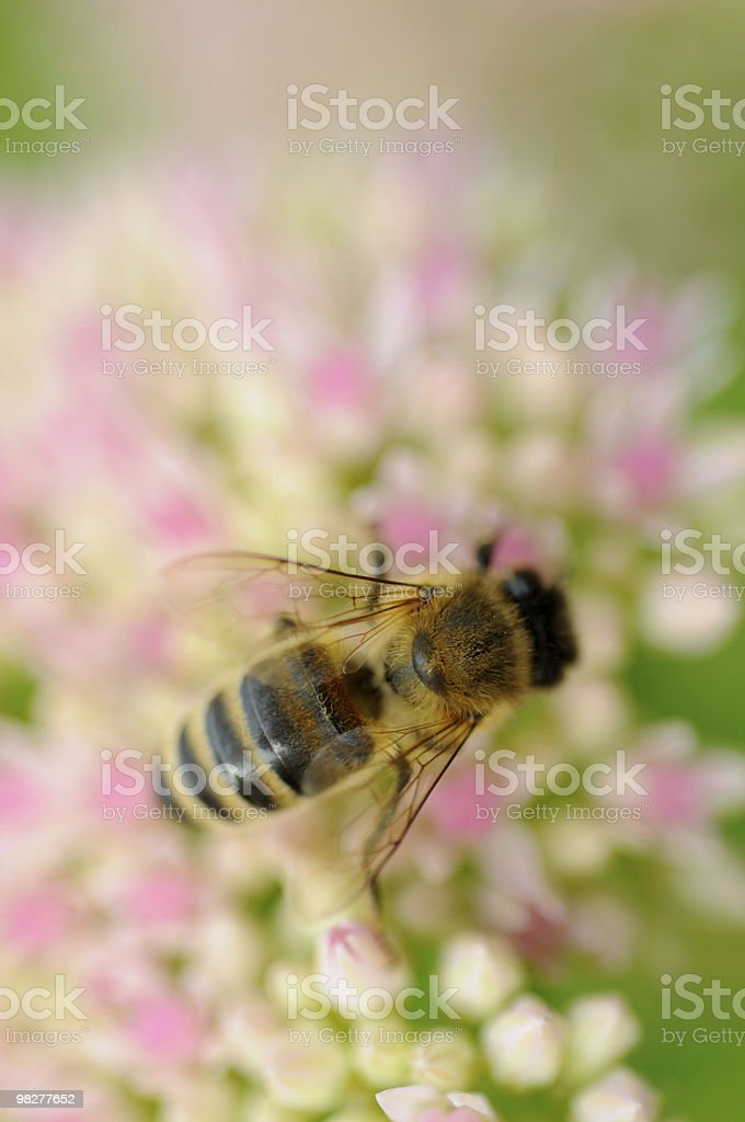 areal view from honey bee royalty-free stock photo