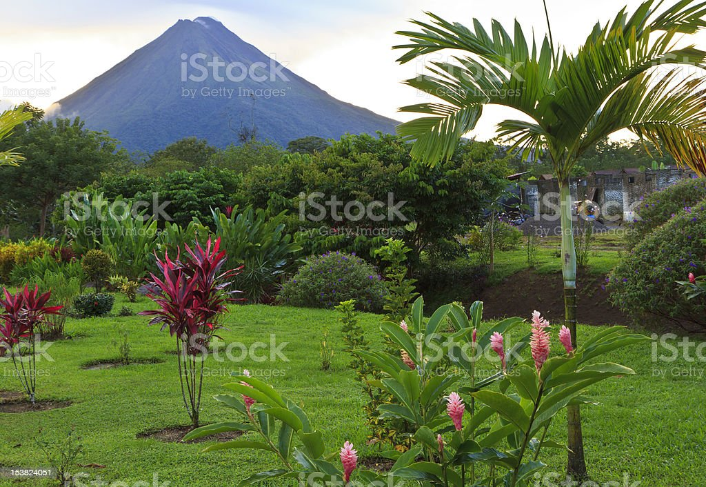 Arenal Volcano and Palm Tree stock photo