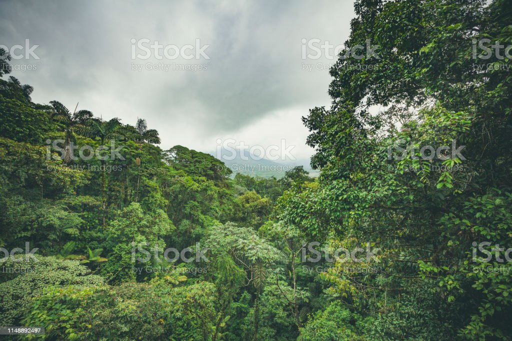 arenal volcano and rainforest, costa rica stock photo