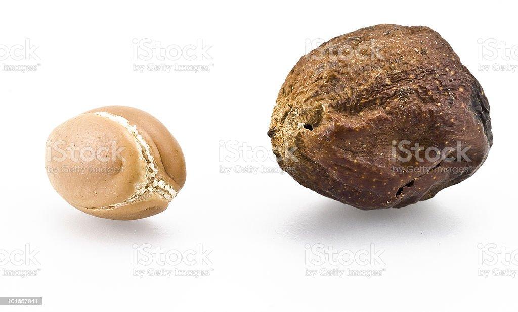 Argan fruits stock photo