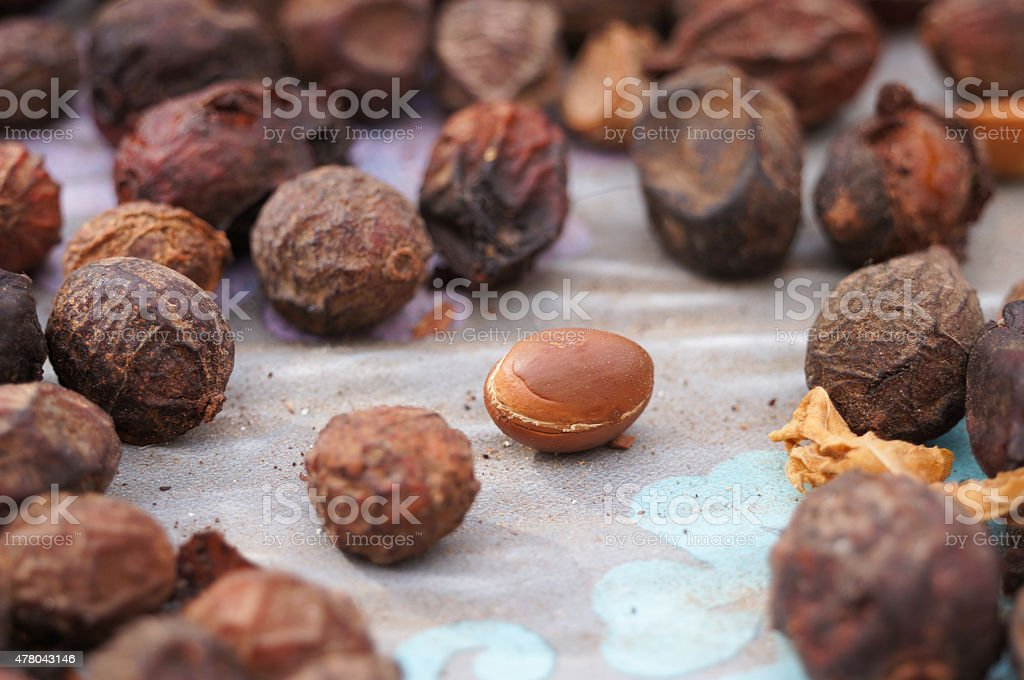 Argan fruits (Argania spinosa) stock photo