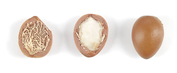 Argan nuts in a row on white background. stok fotoğrafı