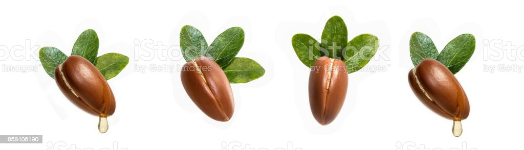 Argan nuts isolated for use in designs stock photo