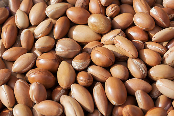 Argan nuts. stock photo