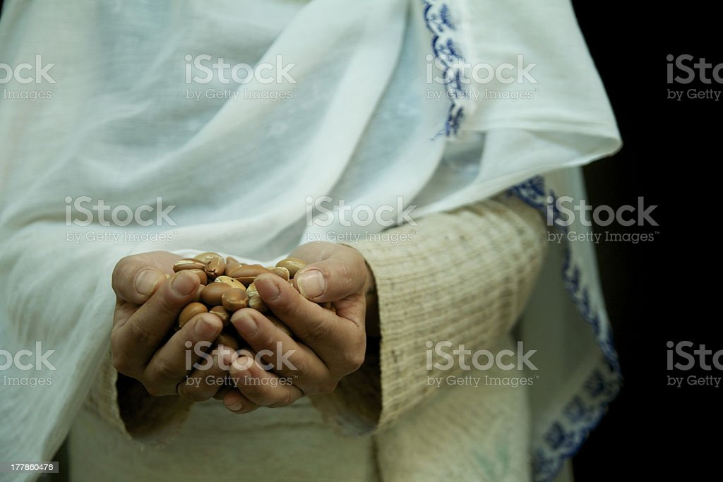 argan seeds in the hands stock photo