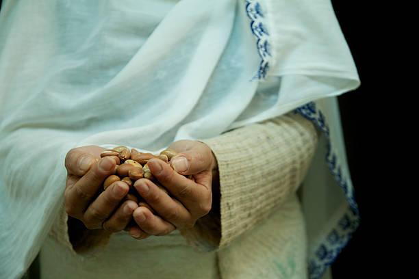 argan seeds in the hands stock photo