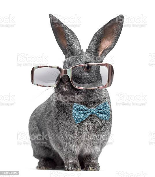 Argente rabbit wearing glasses and bow tie isolated on white picture id608603352?b=1&k=6&m=608603352&s=612x612&h=d xumcfdv4io ukn8lsd1ycka3y2ermzk8difmx8jgk=