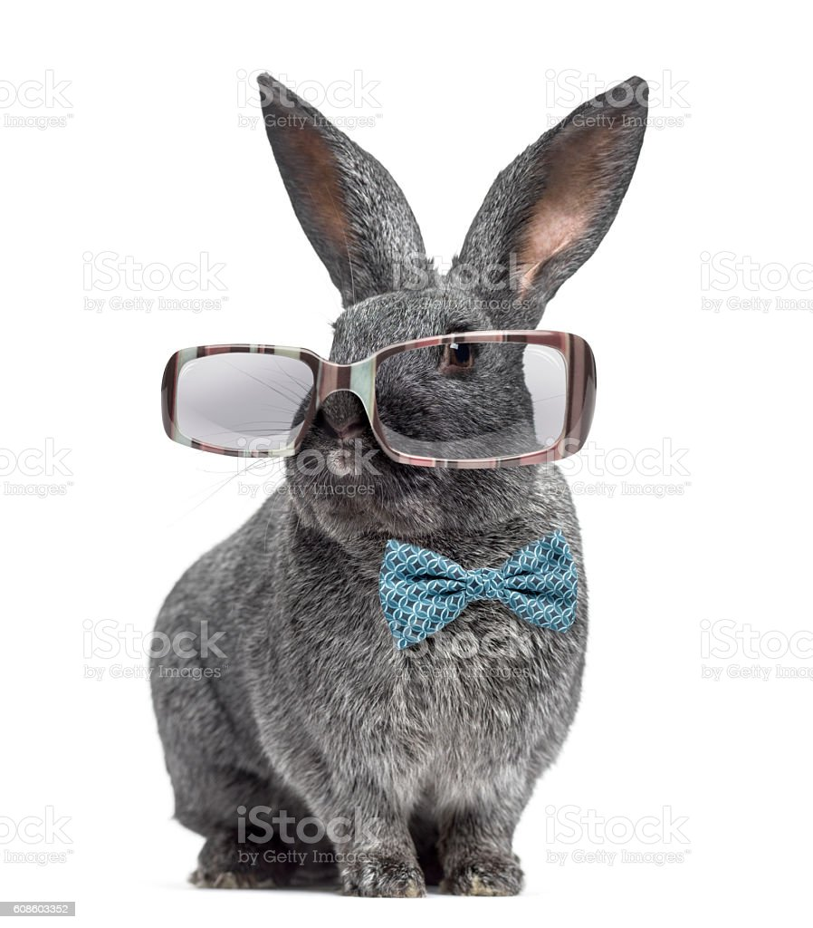 Argente rabbit wearing glasses and bow tie isolated on white stock photo