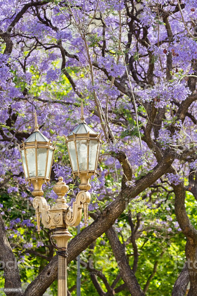 Argentina Buenos Aires Streetlamp Jacaranda Tree In Spring Stock