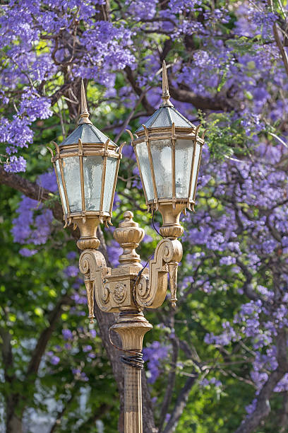 Royalty Free Argentina Buenos Aires Streetlamp Jacaranda Tree In
