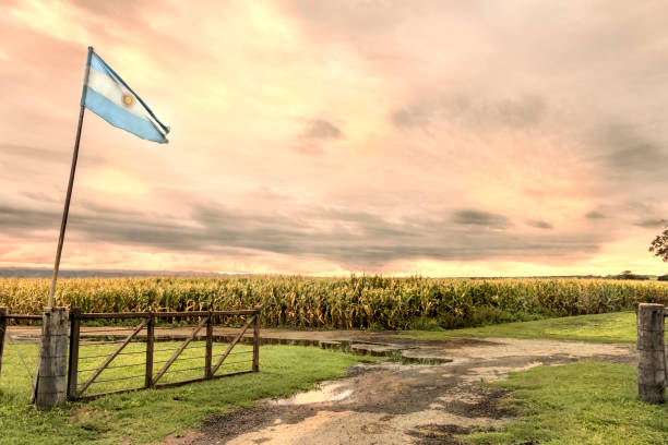 Argentina flag in corn cultivation in the humid pampa, Córdoba, Argentina. stock photo