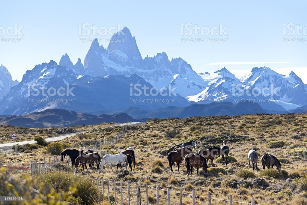 Argentina Patagonia Mount Fitz Roy with horses stock photo