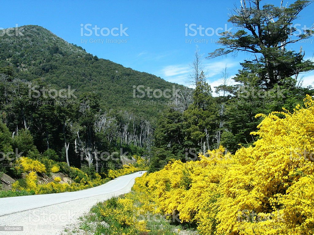 Argentina's 'Yellow Brick' Road stock photo