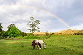 Tranquil daytime scene of mare and foal grazing in Argentine estancia pasture with Sierras Chicas hills and rainbow in background.