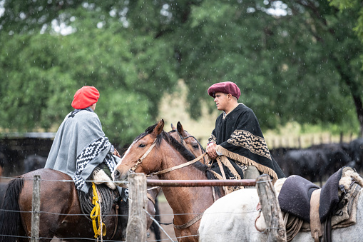Gauchos in traditional boina headwear and poncho sitting astride horses in cattle enclosure in rain