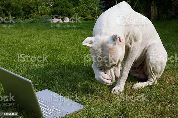 Argentinian dog with laptop picture id90364464?b=1&k=6&m=90364464&s=612x612&h=ca qe2hqov zutwnk pbzj90yy02b2jc14pndoljpks=