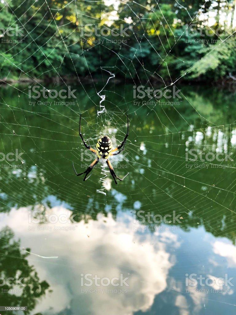 Argiope Aurantia ou aranha de jardim amarelo e Web - foto de acervo