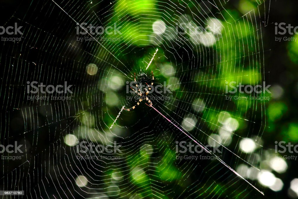 Argiope versicolor em fibra natural de malha. - foto de acervo