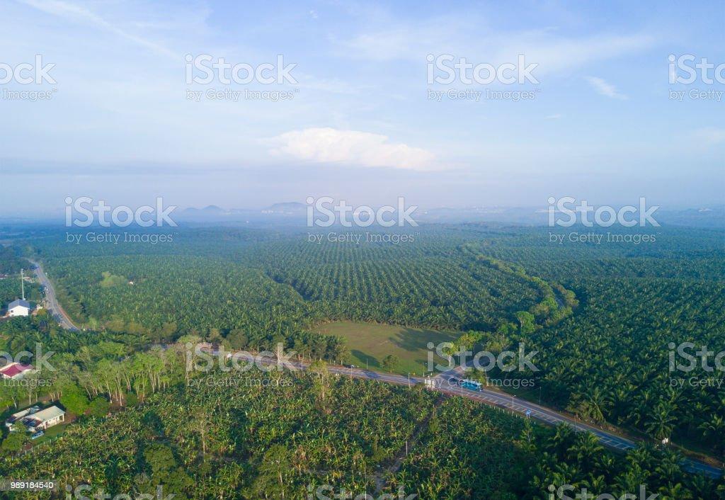 Arial Ansicht des Palmenhains in Ostasien. – Foto