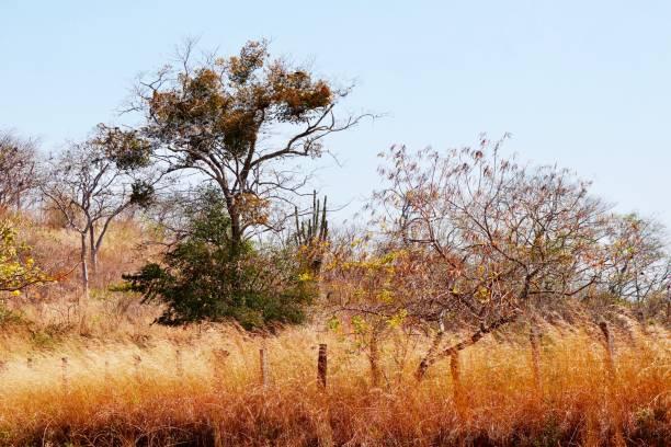 paysage aride et broussailleux - josianne toubeix photos et images de collection