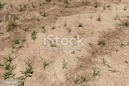 Arid land in the Mississippi State, near Tunica, USA; Concept for drought and global warming