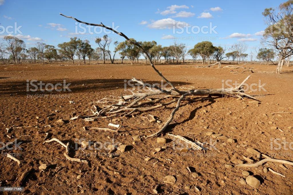 Drought effected paddocks