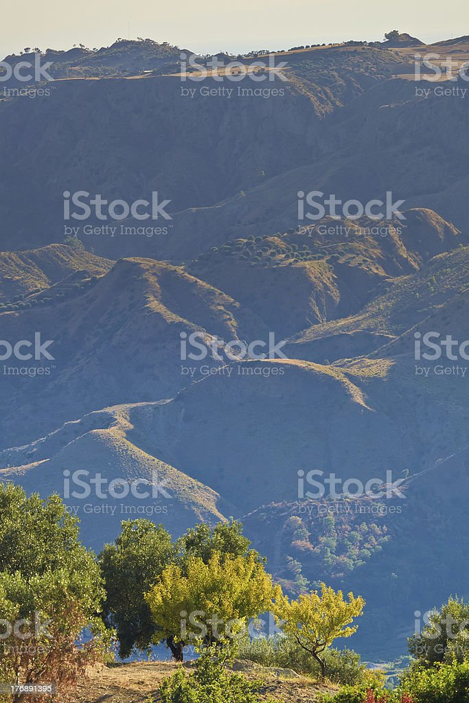 Arid olive hills royalty-free stock photo