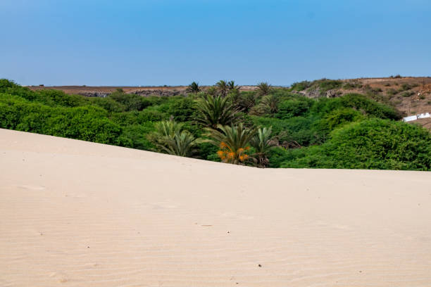 Arid sand environment of the edge of the Viana Desert, Boa Vista in front of lush green forest, Cape Verde - foto stock