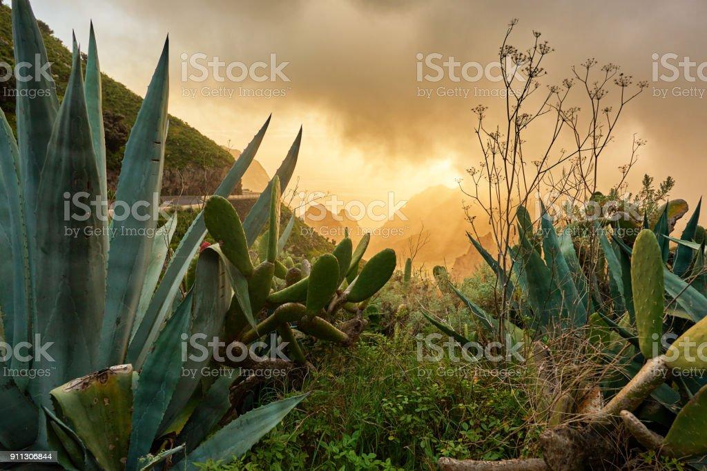 arid vegetation in Tenerife stock photo