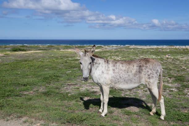 Arikok National Park - Aruba stock photo