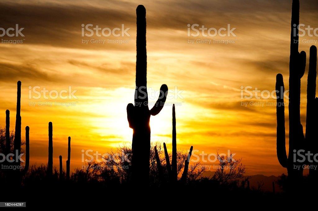Arizona Desert Cactus Sagauro Sunset royalty-free stock photo