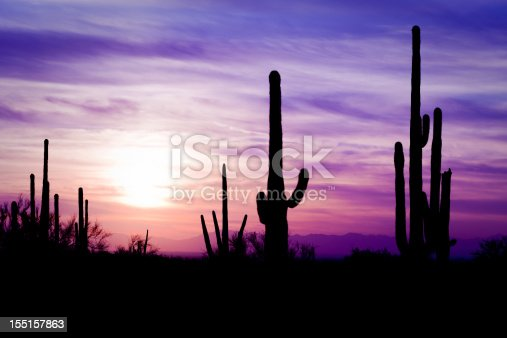 Image of sagauro cacti in AZ desert at sunset
