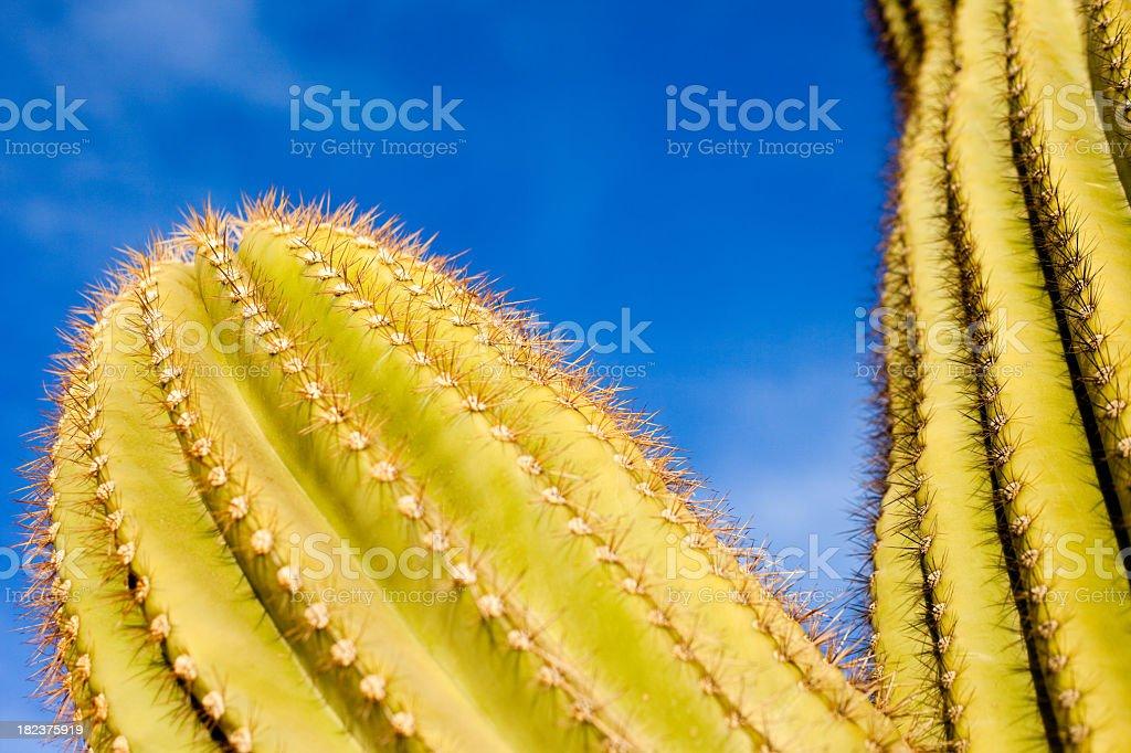 Arizona Desert Cactus Saguaro royalty-free stock photo