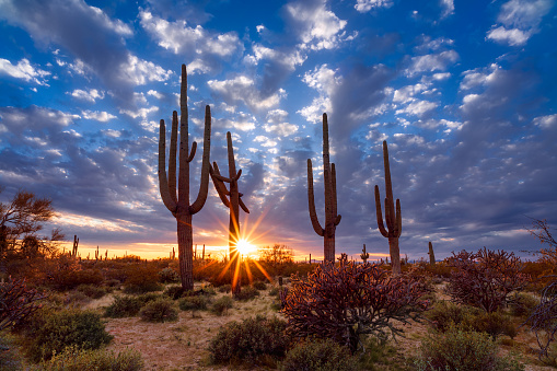 Scenic Arizona desert landscape with Saguaro cactus at sunset.