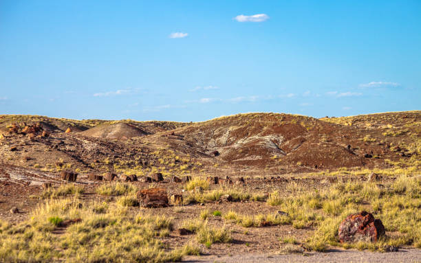 Arizona desert landscape - Petrified forest stock photo