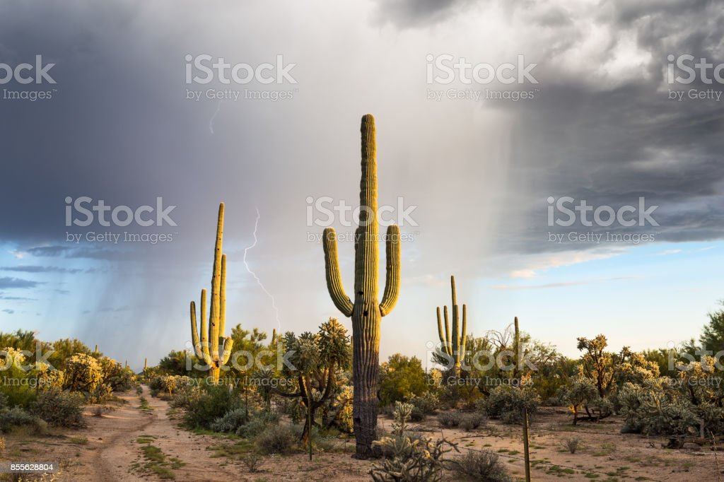 Arizona desert landscape stock photo