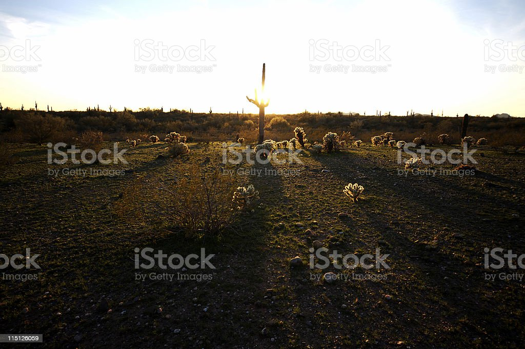 Arizona desert life saguaro royalty-free stock photo