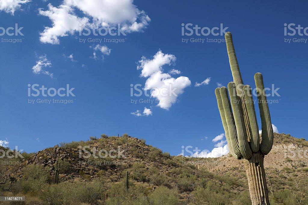 Arizona Desert. royalty-free stock photo