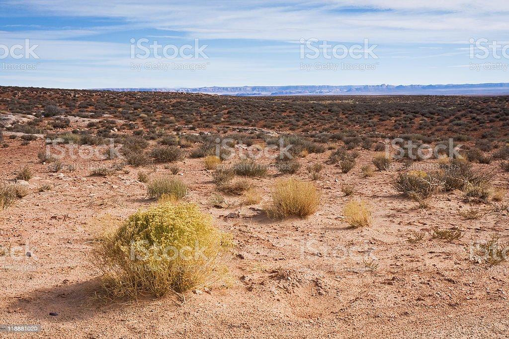 Arizona Desert royalty-free stock photo