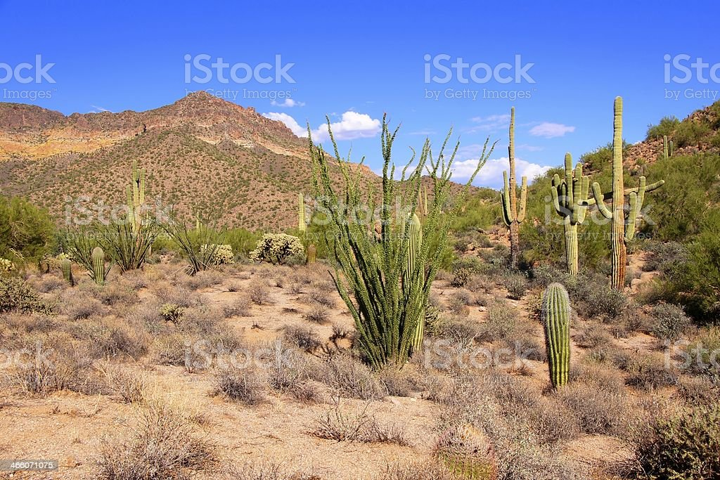 Arizona desert royalty-free stock photo