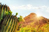 Phoenix Arizona travel scene with blooming saguaro cactus, red mountain and sunshine