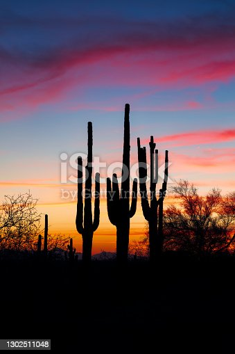 Arizona desert sunset with Saguaro cactus silhouettes and colorful evening sky.