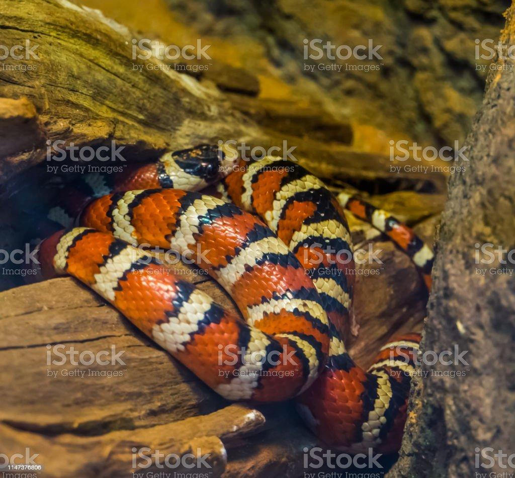 Schlangen als haustier